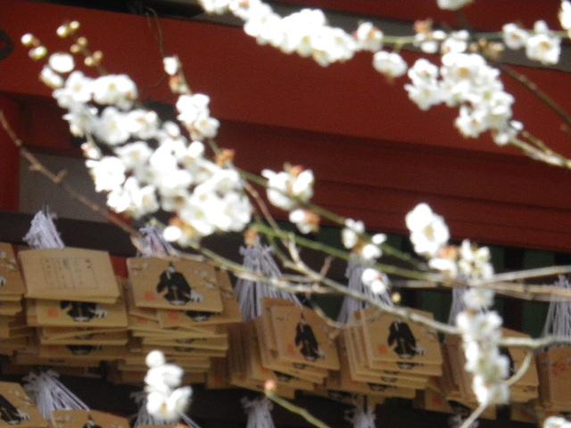 06-3)    17.0218  のどが渇いたから焼鳥くった _ 鎌倉「焼とり 秀吉」