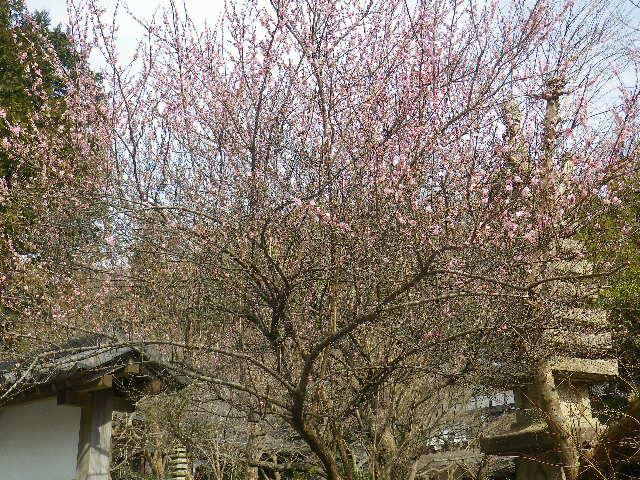 01-1)   山門の外から撮った  17.02.18 鎌倉「覚園寺」 旧友たちの冥福を祈りました