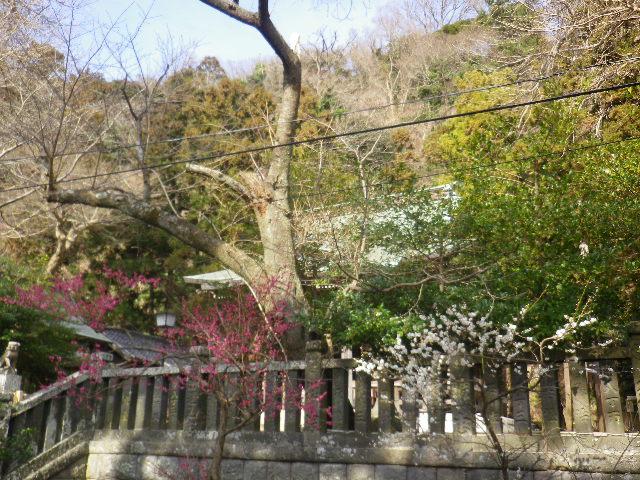 03-1)    17.02.18 鎌倉「御霊神社」