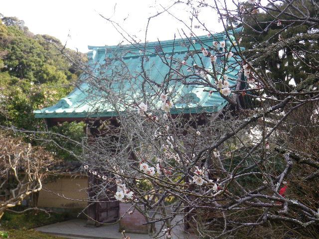 06)   17.02.18 鎌倉「光則寺」 梅咲く頃