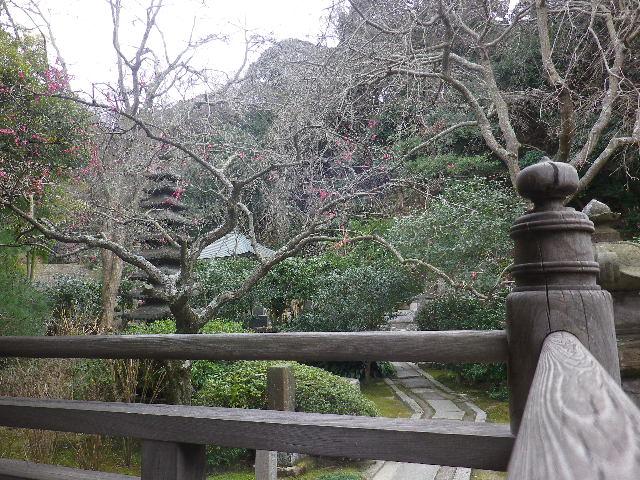 05-1)   17.02.22 鎌倉「安国論寺」 枝先に咲く梅の繊細さが際立つ頃