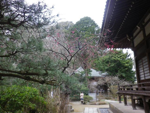 08a) 鎌倉「安国論寺」 枝先に咲く梅の繊細さが際立つ頃