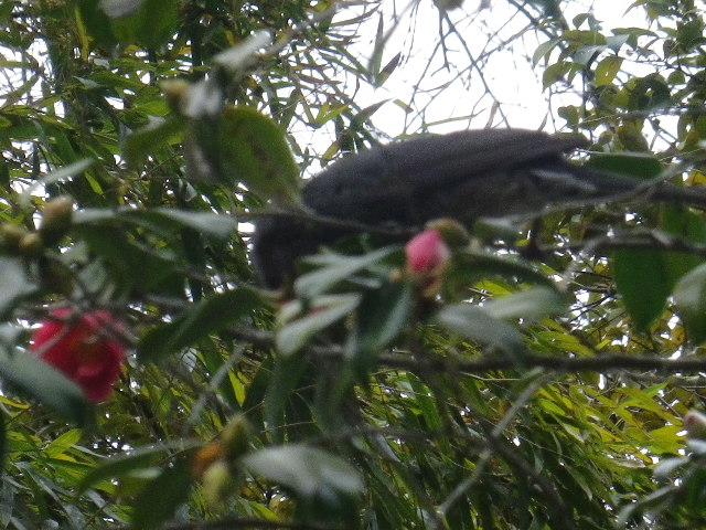 12-3) 鎌倉「安国論寺」 枝先に咲く梅の繊細さが際立つ頃