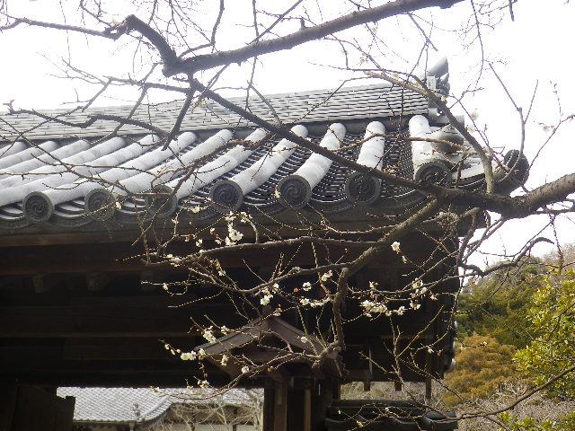 01)    17.02.22 鎌倉「浄光明寺」 立春から半月後の境内