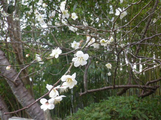 02-2)     17.02.22 鎌倉「浄光明寺」 立春から半月後の境内