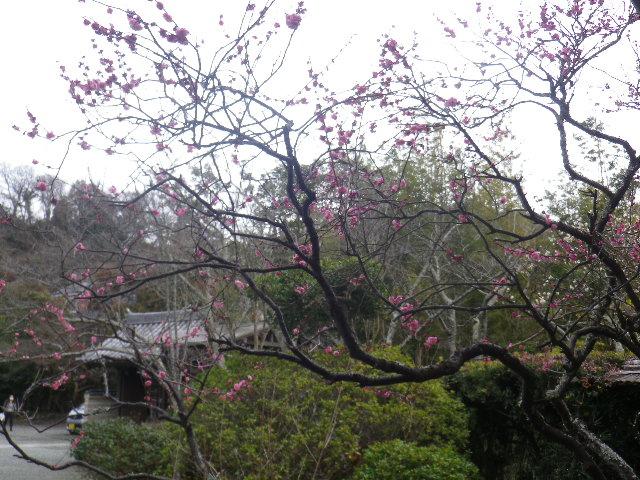 04-1)    17.02.22 鎌倉「浄光明寺」 立春から半月後の境内