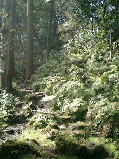 09) 佐助稲荷。 ここから更に山奥へ登る道