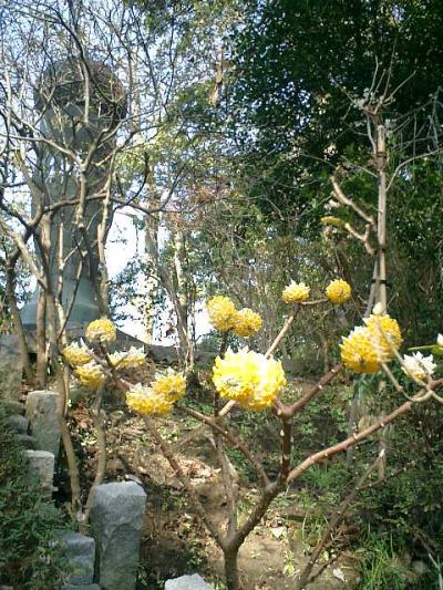 0504_07.02.21 鎌倉「荏柄天神社」梅の季節