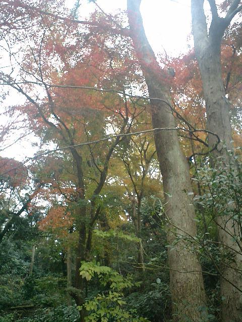 02_06.12.17鎌倉市長谷「光則寺」紅葉の季節