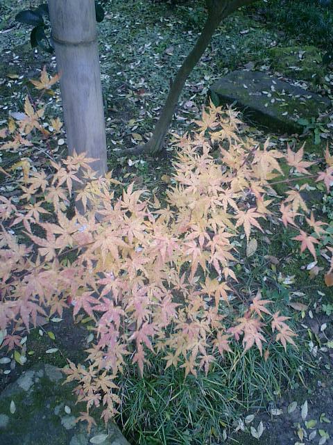 05_06.12.17鎌倉市長谷「光則寺」紅葉の季節