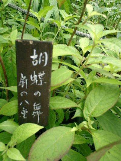 01-1_06.06.12鎌倉長谷「光則寺」紫陽花の季節