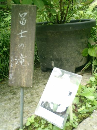 07-1_06.06.12鎌倉長谷「光則寺」紫陽花の季節