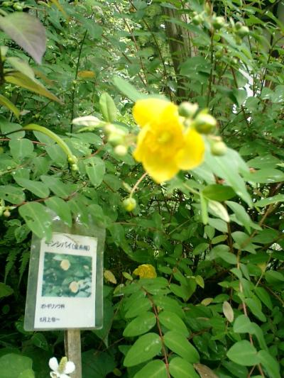 11-2_06.06.12鎌倉長谷「光則寺」紫陽花の季節