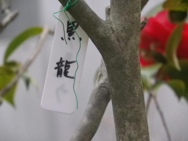 18-1) ' #黒龍 ' _ 17.03.25 日蓮宗系単立寺院 長慶山 大巧寺(だいぎょうじ)