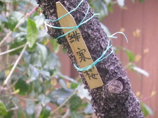 28-1) ' #緋寒桜 ' _ 17.03.25 日蓮宗系単立寺院 長慶山 大巧寺(だいぎょうじ)