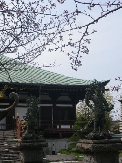 03-2右)   17.03.30 鎌倉「長勝寺」 桜が開花し始めた頃