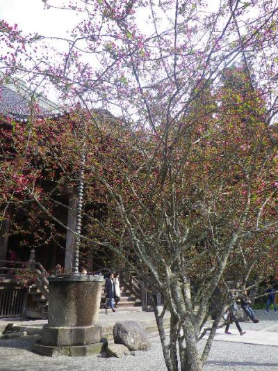 10-1)  ' 祖師堂 ' 手前左側の海棠   17.04.02 鎌倉「妙本寺」の桜