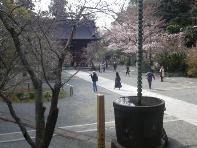 12) ' 祖師堂 ' から、 ' 二天門 ' ~ ' 日蓮聖人像 '  方向    17.04.02 鎌倉「妙本寺」の桜