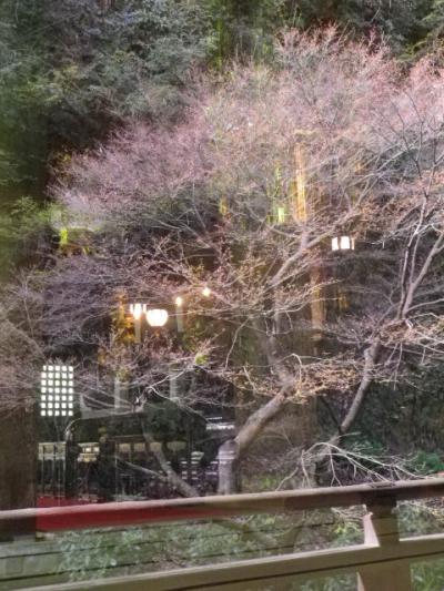 14)  コレも他の方がやっていたから 私も真似っ子して、こっ恥ずかしいくらいに あざとい構図で撮ってみた。   ' 祖師堂 ' 右側面の素通しガラスに映った桜と回廊を撮った。今回は例外
