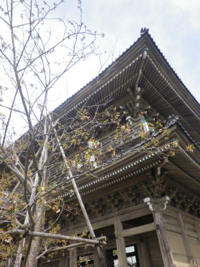 03-1)   17.04.02 鎌倉「光明寺」の桜