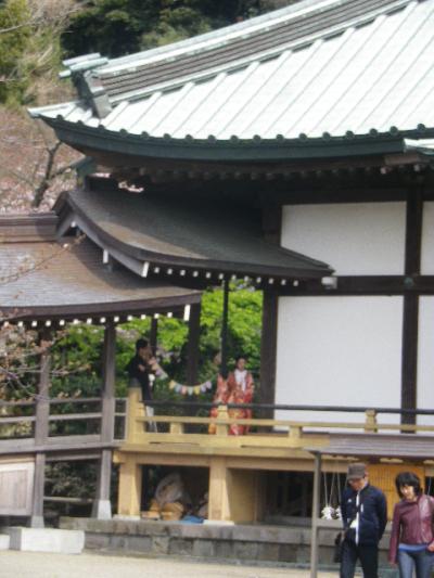 08)   17.04.02 鎌倉「光明寺」の桜
