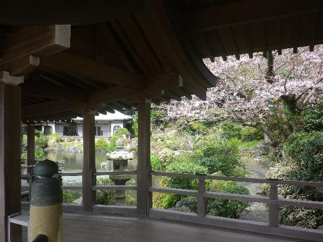 11)   17.04.02 鎌倉「光明寺」の桜