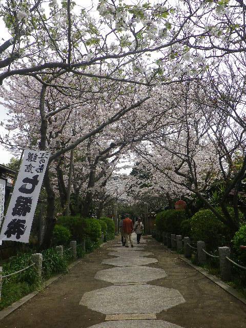 01)    17.04.10 鎌倉「宝戎寺」 例年よりも開花が遅かった参道の桜