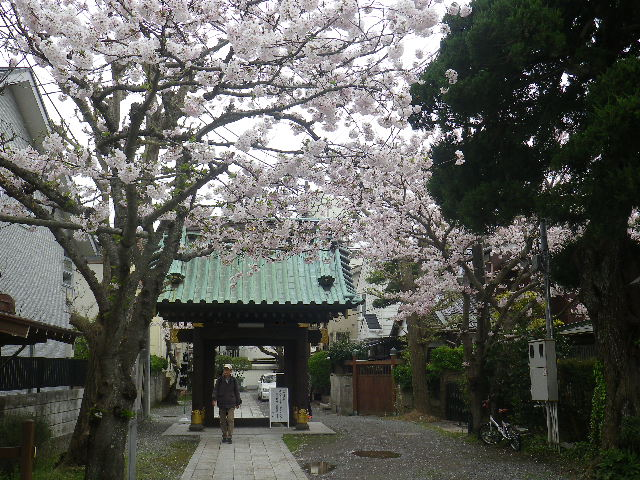 02)   17.04.10 鎌倉「妙隆寺」の桜