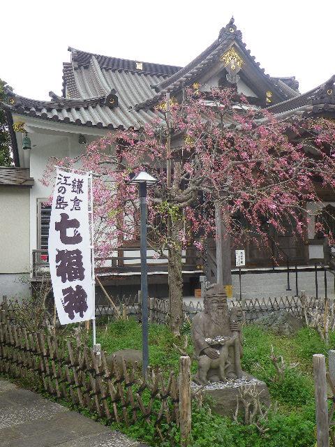 06-1)   17.04.10 鎌倉「妙隆寺」の桜