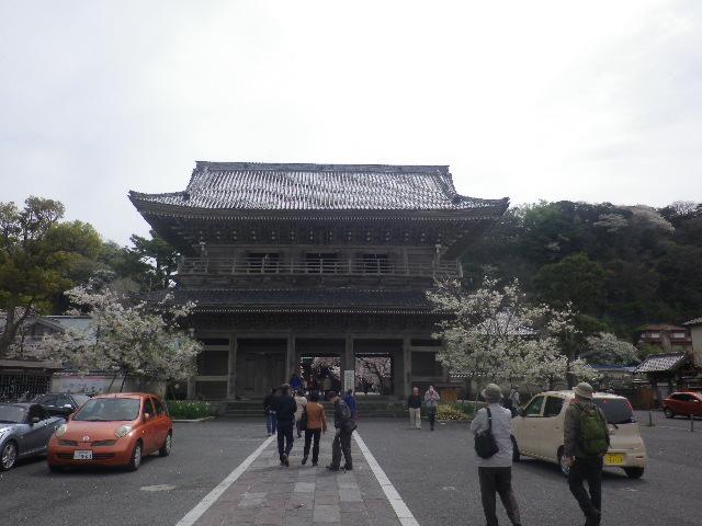 01)    17.04.10 鎌倉「光明寺」の桜