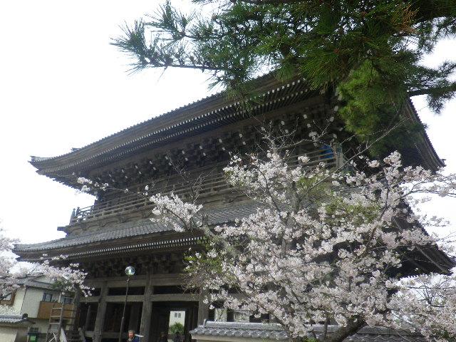 03)    17.04.10 鎌倉「光明寺」の桜