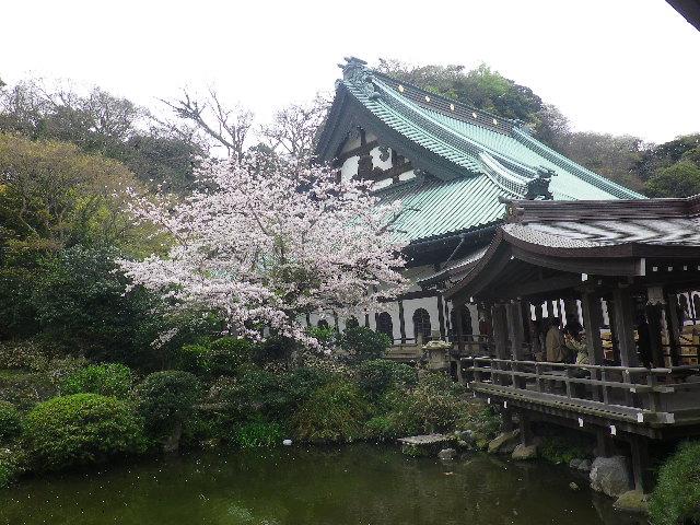 09-3)    17.04.10 鎌倉「光明寺」の桜