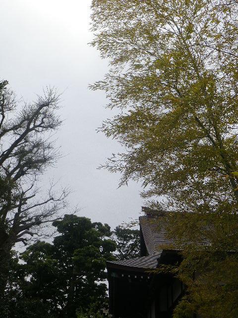 09)   本堂裏の墓地から   17.04.10 鎌倉「教恩寺」の桜 と リュウキュウバイ