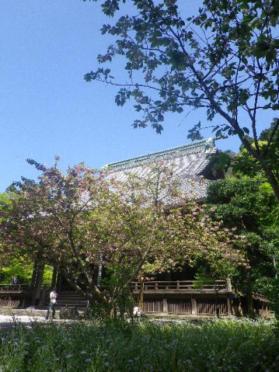 01-1)  ' 比企一族墓所 ' 前から、' 祖師堂 ' 方向。   17.04.23 鎌倉「妙本寺」の八重桜、御衣黄(ギョイコウ)、シャガと新緑。