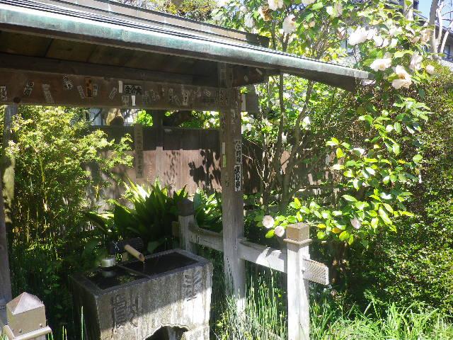 01-1) トキノハガサネ  _ 17.04.23 鎌倉「大巧寺」 晩春の庭