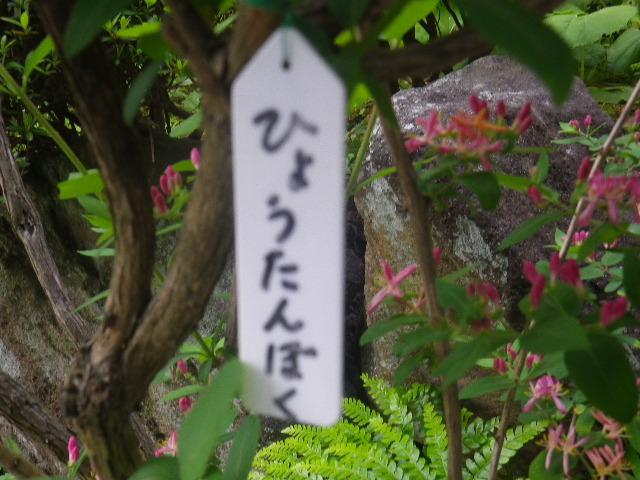 07-1) ひょうたんぼく  _ 17.04.23 鎌倉「大巧寺」 晩春の庭
