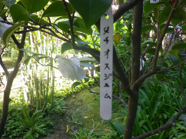15-1) ヌチオスジェム _ 17.04.23 鎌倉「大巧寺」 晩春の庭