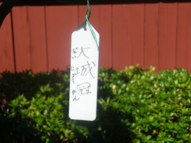 20-1) 大城冠(だいじょうかん) _ 17.04.23 鎌倉「大巧寺」 晩春の庭