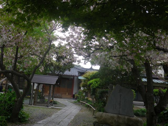02)    17.04.22 鎌倉「千手院」の桜