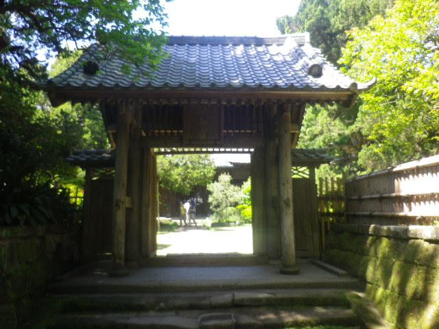 04)    17.05.05端午  鎌倉「寿福寺」立夏。 中門を潜ることができる期間の日。