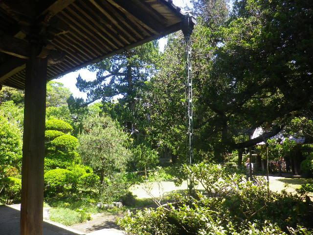 13-1)    17.05.05端午  鎌倉「寿福寺」立夏。 中門を潜ることができる期間の日。