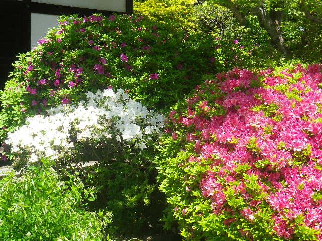 01-2)   17.05.05端午  鎌倉「浄光明寺」立夏