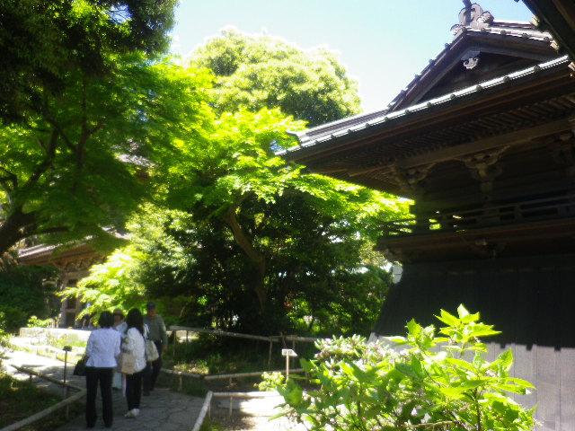 03-1)   鐘楼 17.05.05端午  鎌倉「英勝寺」立夏。