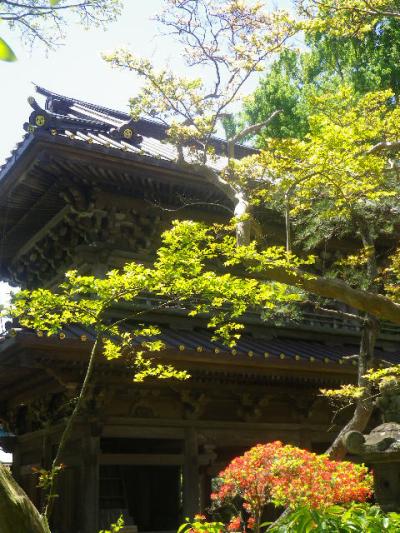 05-2)   写真05-1)の少しだけズームアップ 17.05.05端午  鎌倉「英勝寺」立夏。