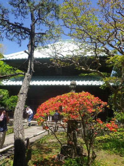 07)   山門裏から仏殿の正面(表側)方向。国の重要文化財 17.05.05端午  鎌倉「英勝寺」立夏。