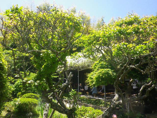 13)   宝物庫周辺から、書院方向。 17.05.05端午  鎌倉「英勝寺」立夏。