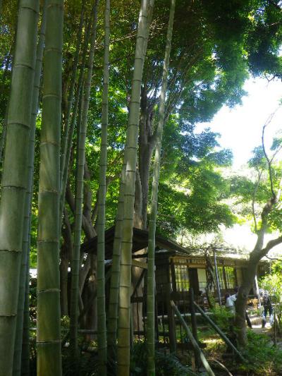 14)     竹林から、書院方向。  17.05.05端午  鎌倉「英勝寺」立夏。