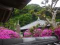 03)   17.05.09 鎌倉「安養院」の 咲き揃ったツツジ