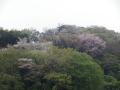 04-1)   17.04.17 近所の山桜などをテキトーに撮った