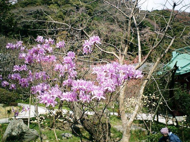 13-1) 鎌倉長谷「光則寺」。 右は山門